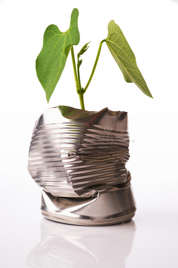 Recycling concept plant growing out of tin can. Green recycling concept plant growing out of tin can on white reflective background royalty free stock photography