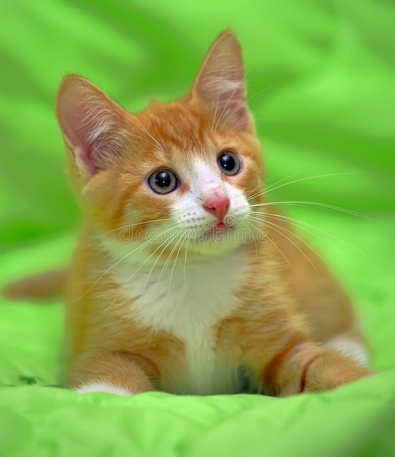 Free Red And White Kitten On A Green Royalty Free Stock Photo - 44338155