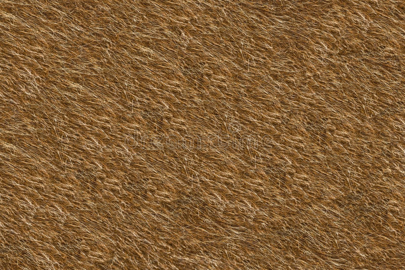 Red animal fur. Useful as natural background stock photo