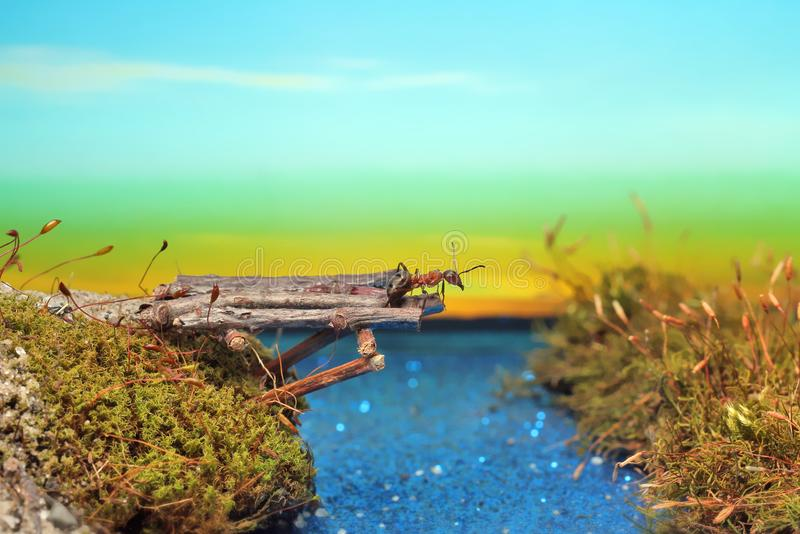 Red ant crosses the river on a log stock photography