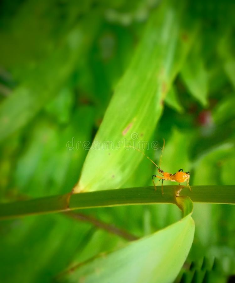 Red ant walk on a green leaf ,macro nature,insect stock photo