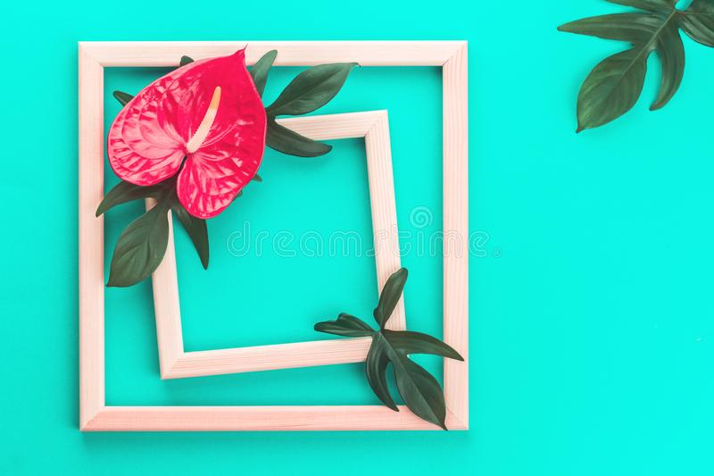 Red anthurium flower and leaves on mint royalty free stock image