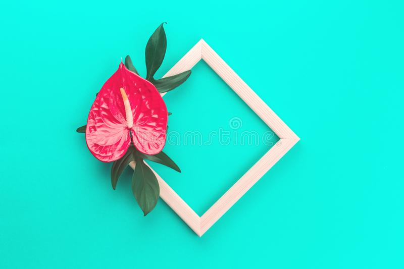 Red anthurium flower and leaves on mint stock photo
