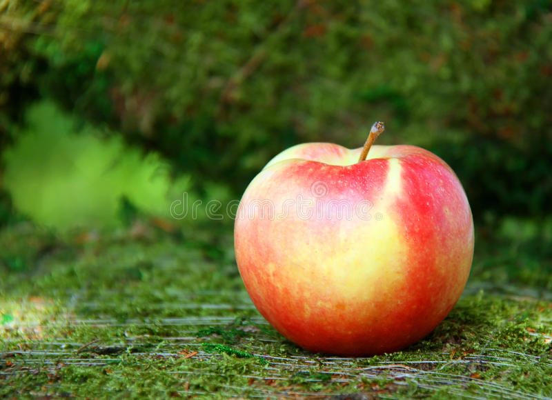 Download Red apple stock photo. Image of ripe, orchard, juicy - 27066750