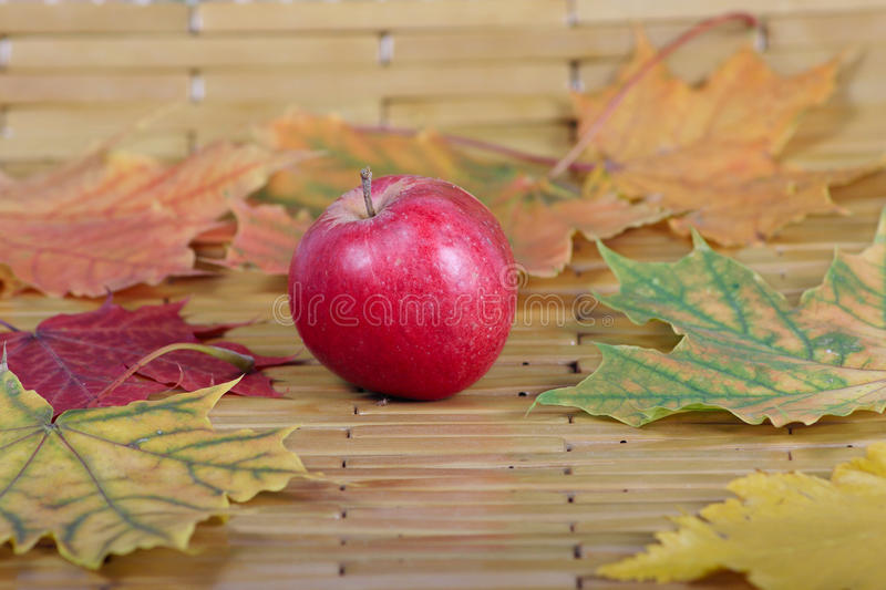 Red apple against autumn leaves