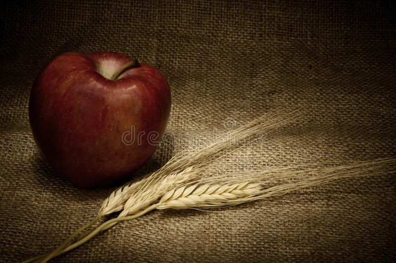 Download Red apple and cereals stock image. Image of wheat, ears - 22294157