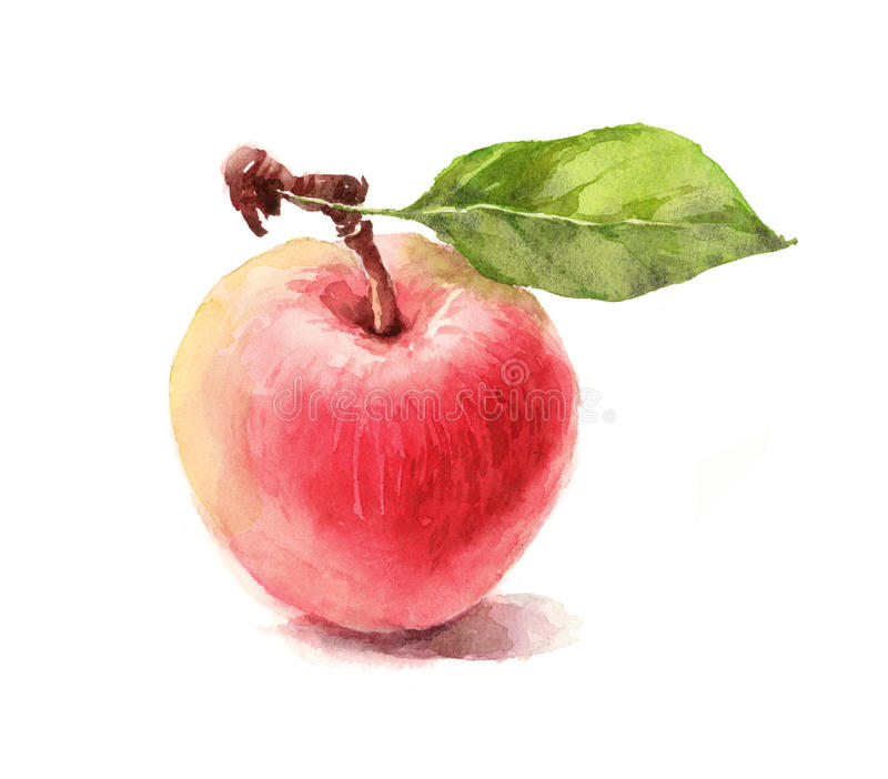 apple fruit painting. red apple fruit watercolor still life illustration hand painted painting