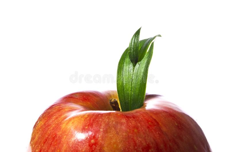 Red apple with green leaf - macro shot royalty free stock photography