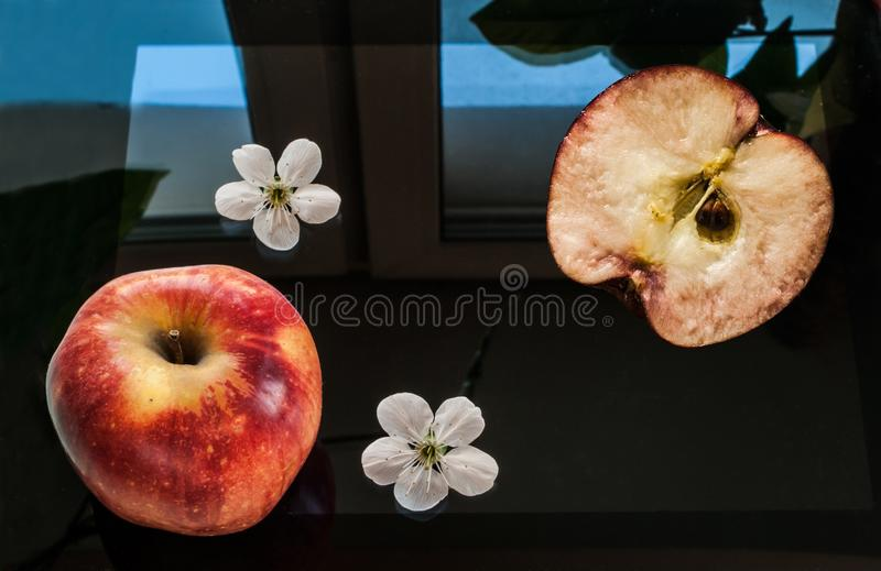 A red apple, a half of an apple and two apple flowers lay on a black, switched off screen of a tablet. A window and a green plant reflect on a smooth surface stock photo