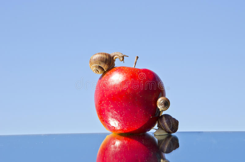 Red Apple And  Snails On Mirror Stock Photos