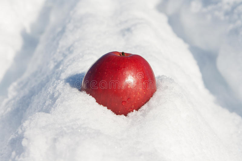 Red Apple On A Snow Stock Image
