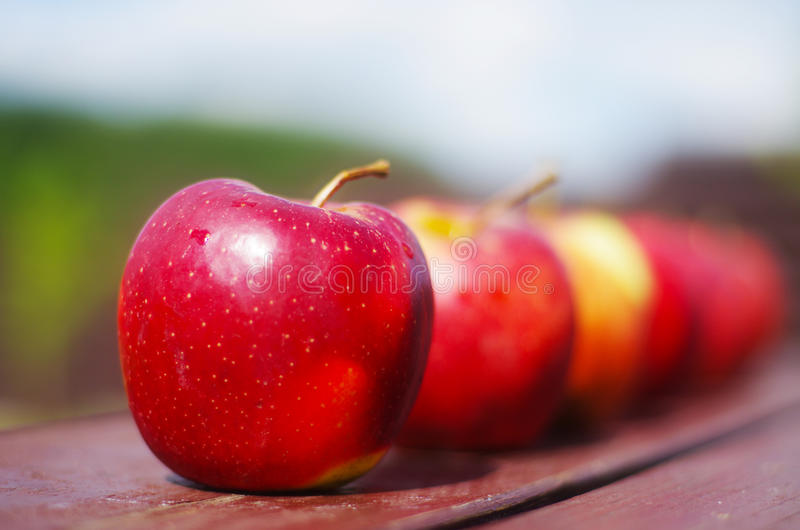 Red tasty apple stock images