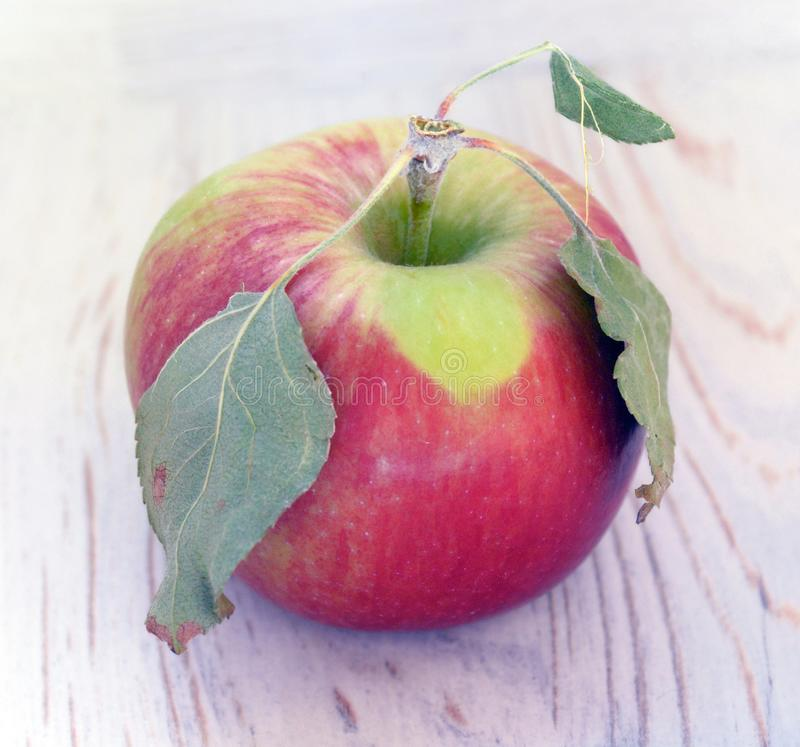 Red apple with three dried leaves macro stock photography