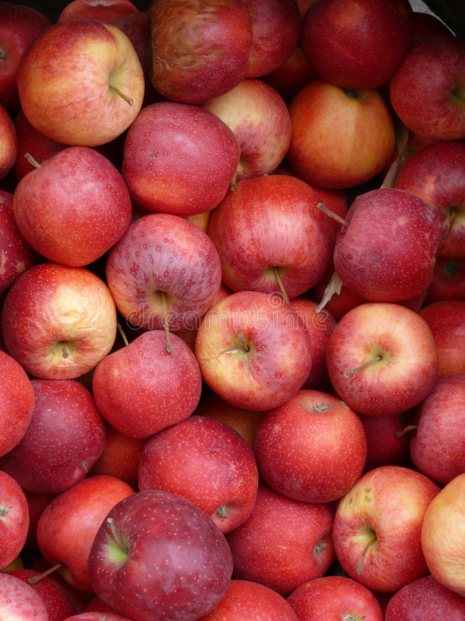 Download Red Apples In A Crate Royalty Free Stock Photography - Image: 1905067
