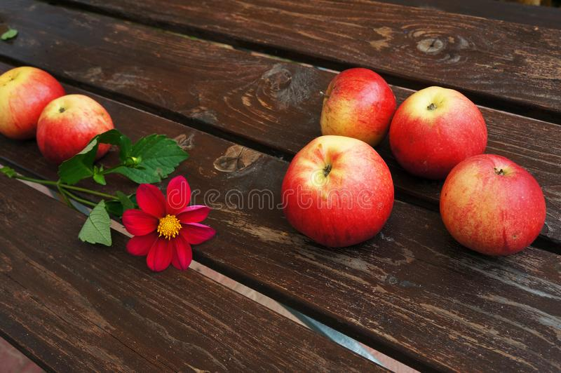 Red apples and flower. Red apples and flower on brown wooden boards royalty free stock image