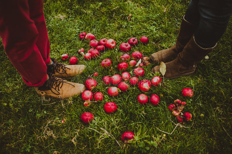 Red apples and legs couples. Top view royalty free stock image