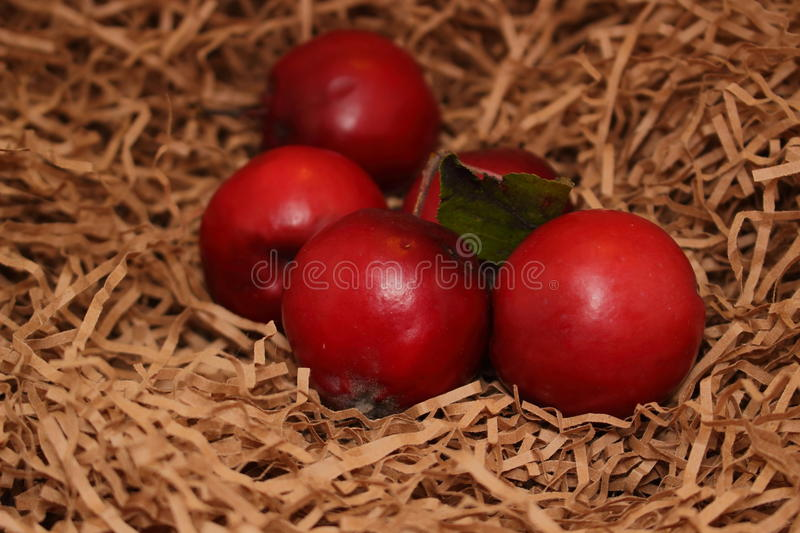 Red apples on paper royalty free stock photo