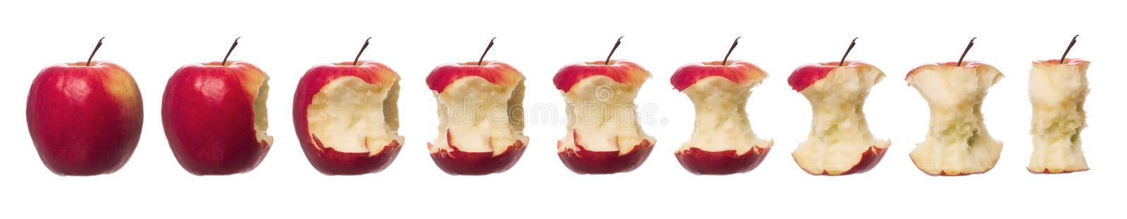 Red apples in progress stock images