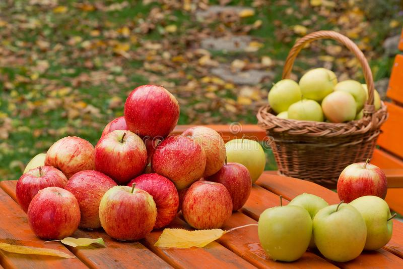 Red apples on the table. In garden royalty free stock photography