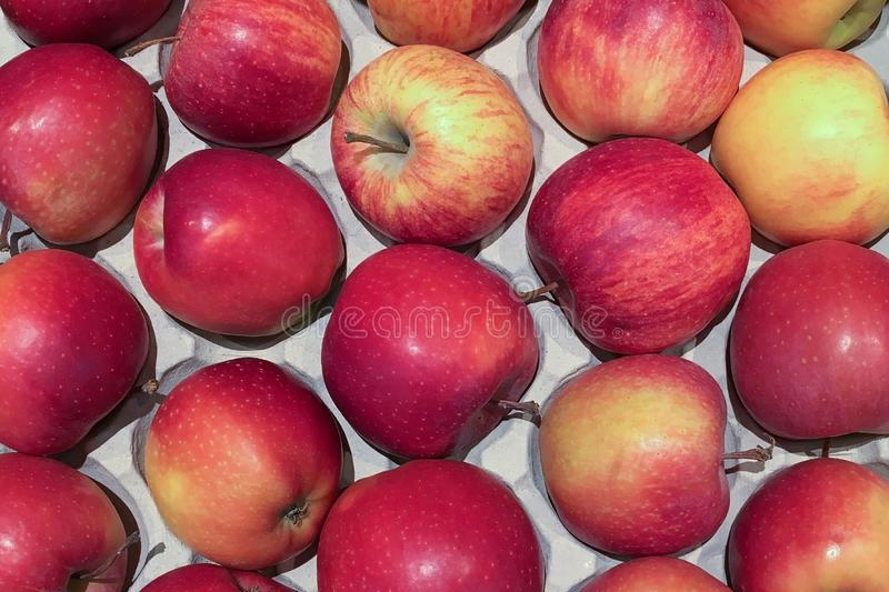 Red apples on tray close up stock photography