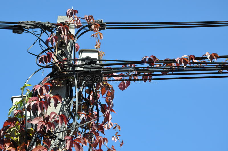Red autumn ivy. On telecom pole stock photography