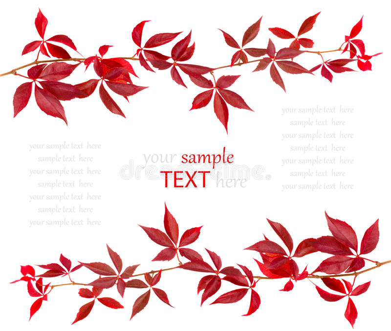 Red autumn leaf. Isolated on white background, with room for text royalty free stock photos