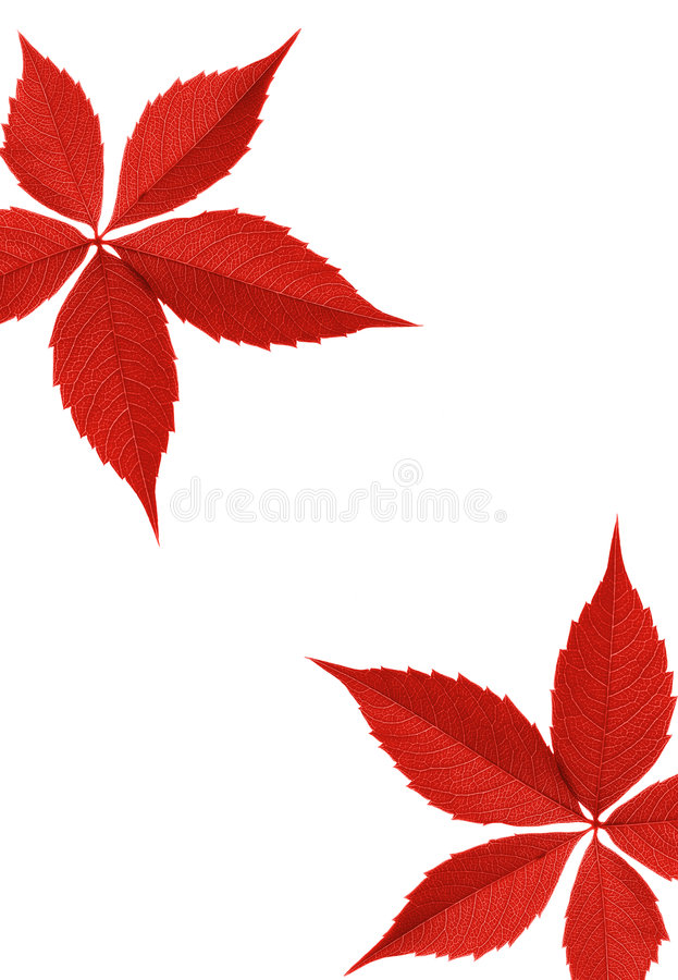 Download Red autumn leaf border stock photo. Image of floral, bright - 2967728