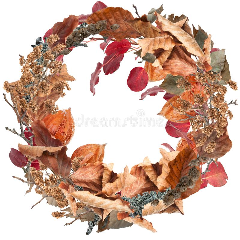 Red autumn leaves wreath isolated on white. Red autumn leaves bright wreath isolated on white stock photo