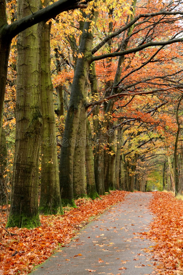 Free Red Autumn Road Stock Image - 6982241