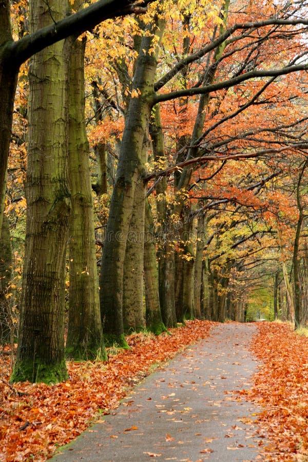 Red autumn road. Quiet road during autumn season stock image