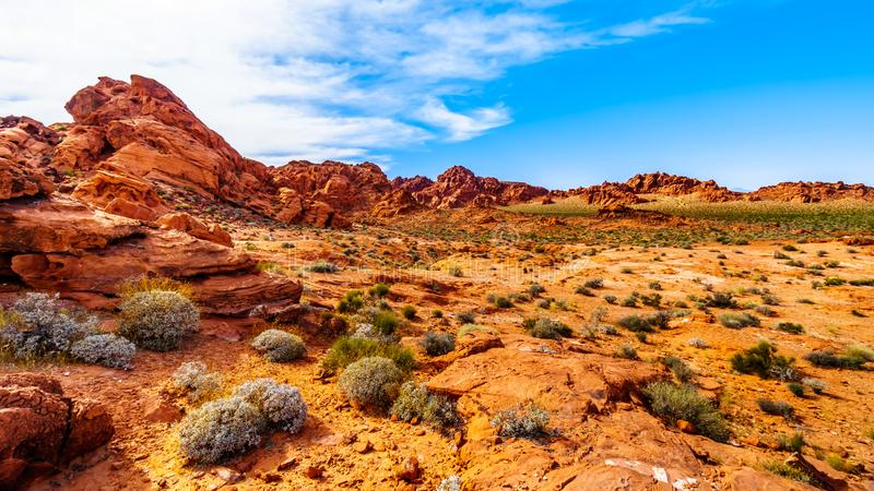 Red Aztec sandstone rock formations in the Valley of Fire State Park, Nevada,USA stock image