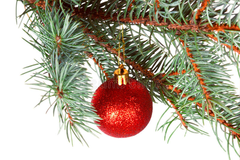Download Red Ball On The Branch Of Christmas Tree Stock Photo - Image: 36339180