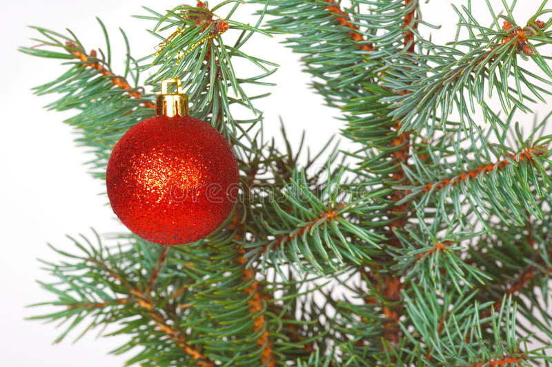 Red Ball On The Christmas Tree Royalty Free Stock Photography