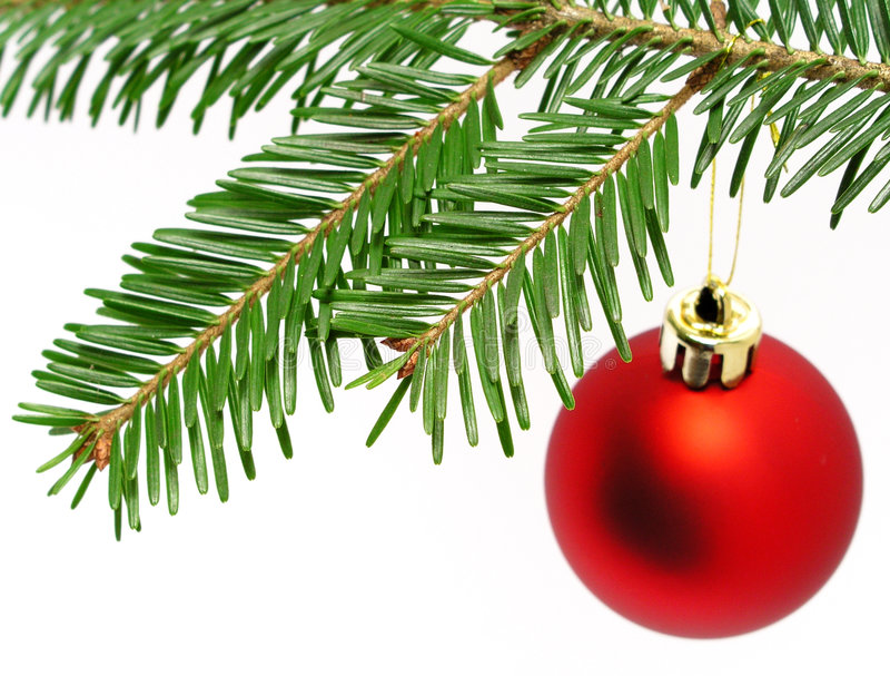 Red ball hanging from christmas tree. Isolated royalty free stock photo