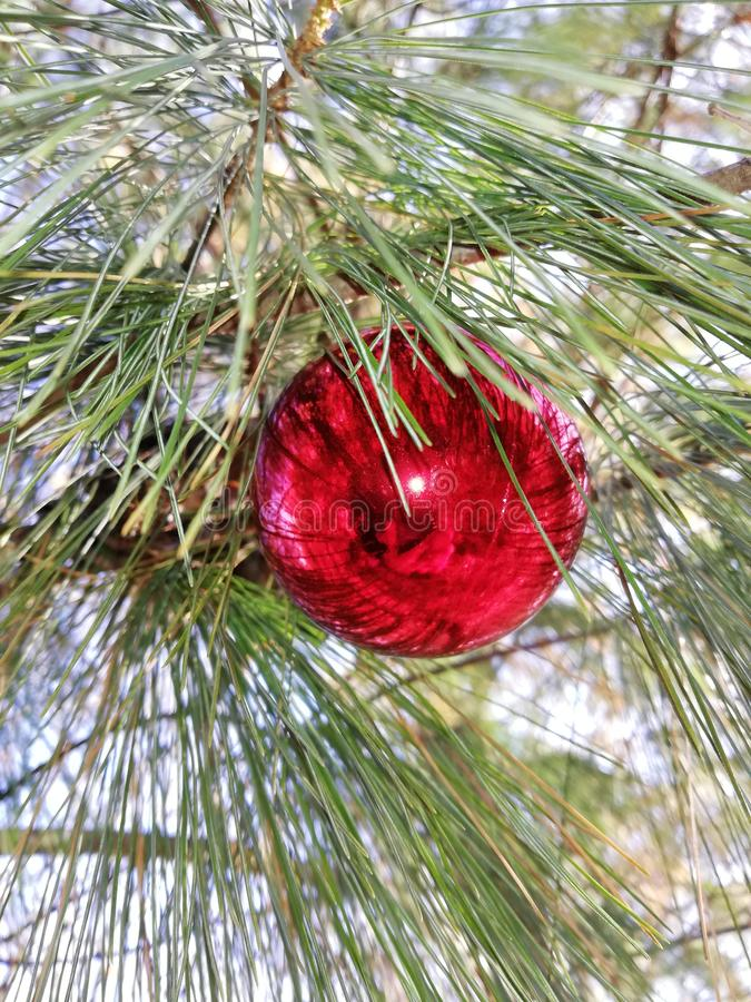 Red ball with pine branches stock image