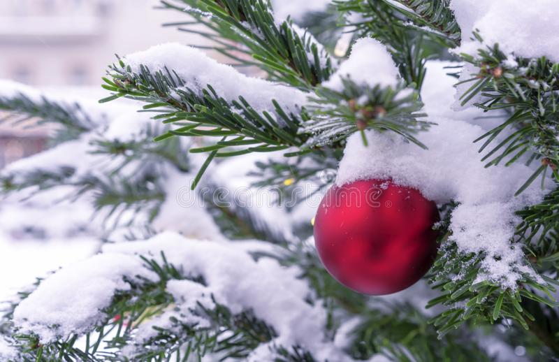 Red ball on a snowy Christmas tree. Decorations New Year, Christmas stock images