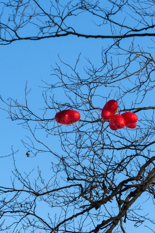 red heart shaped balloons for valentines day on the branches royalty free stock photo