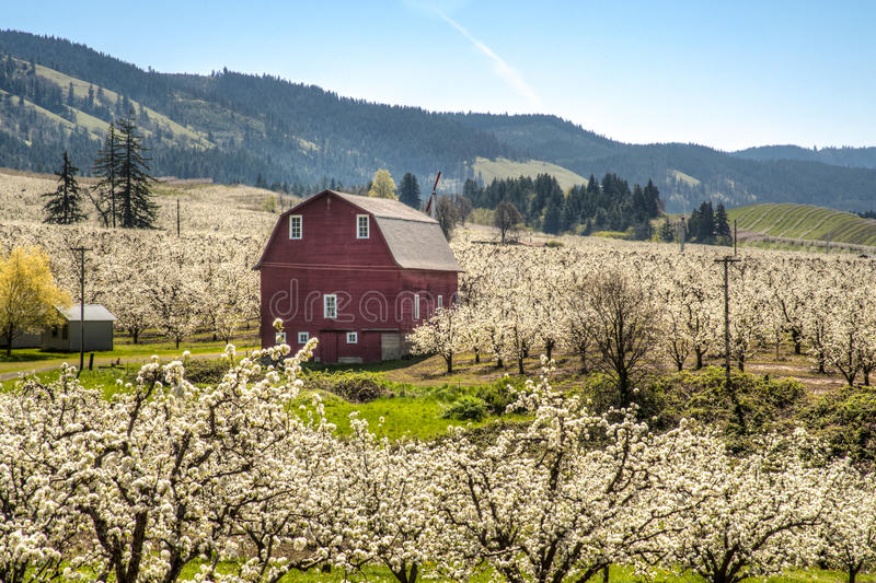 Download Red barn, apple orchards stock image. Image of pacific - 24684493