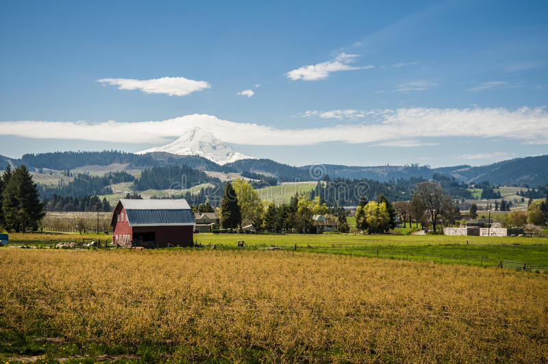Download Red Barn, Apple Orchards, Mt. Hood Stock Photo - Image: 24641334