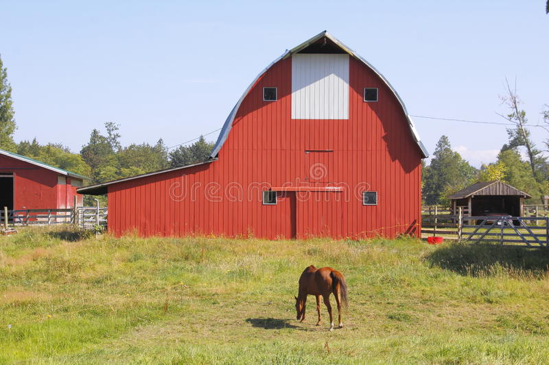 Red Barn and Horse Grazing. An adult horse grazes in a pasture in front of a traditional red barn stock photo