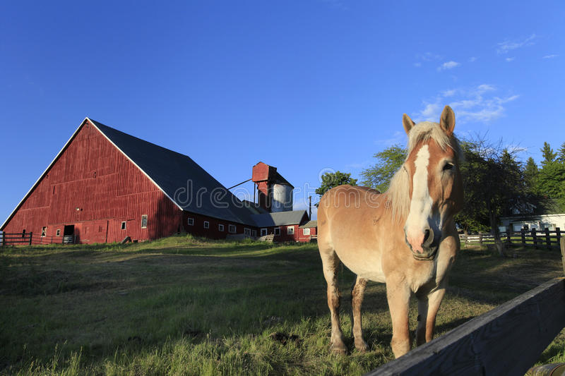 Download Red Barn with Palomino stock photo. Image of white, farm - 32193964