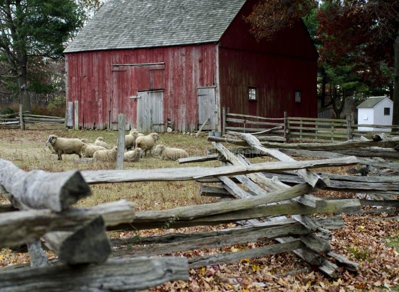 Red barn and sheep at Old Bethpage Village Restoration in Old Be. Old Bethpage Village Restoration on Long Island, NY stock image