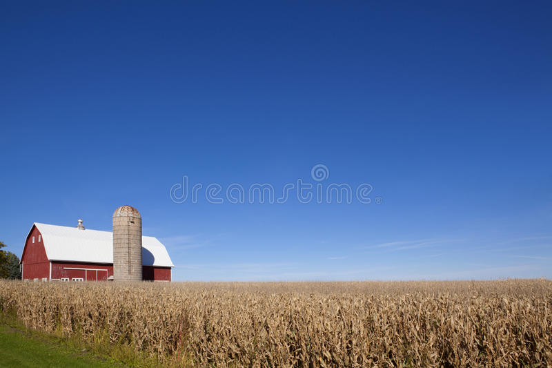 Red Barn, Silo and Corn Field royalty free stock image