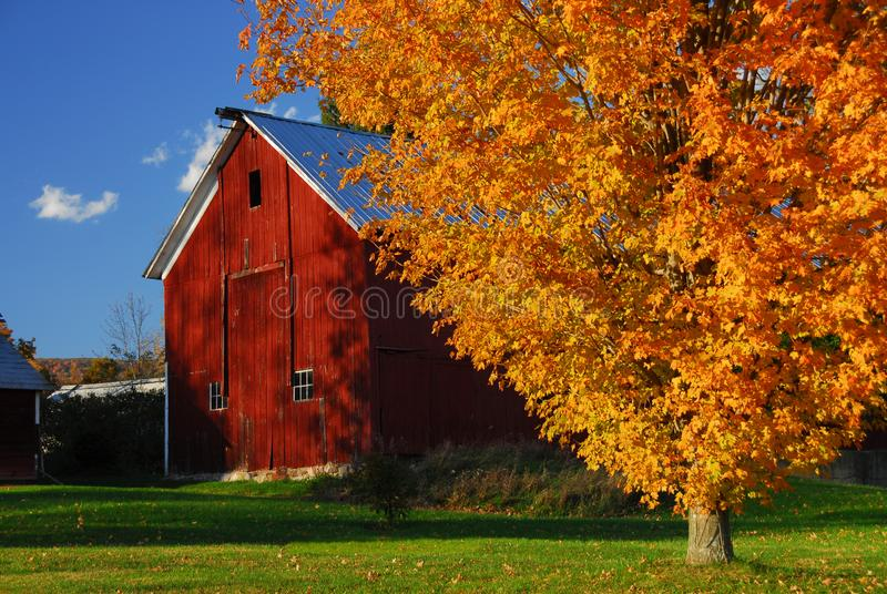 Red barn surround by yellow fall leaves in New England. A crisp, classic autumn scene of a red barn in New England royalty free stock photos