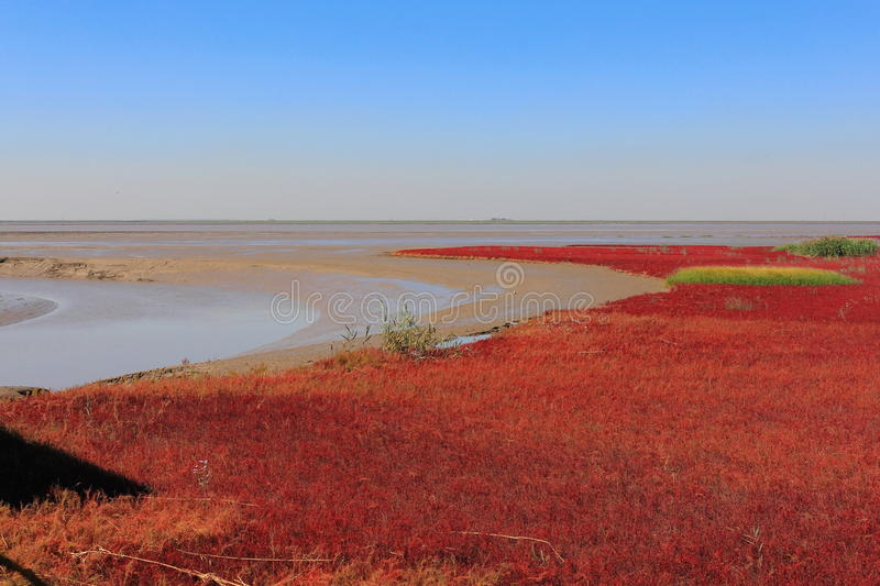 Red Beach of Panjin in China stock photo