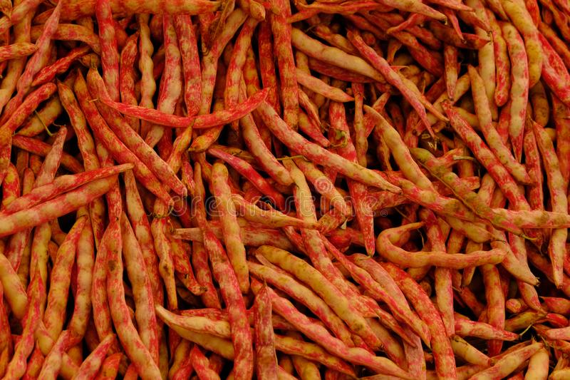 Red bean string close up. background: green wax beans stock image