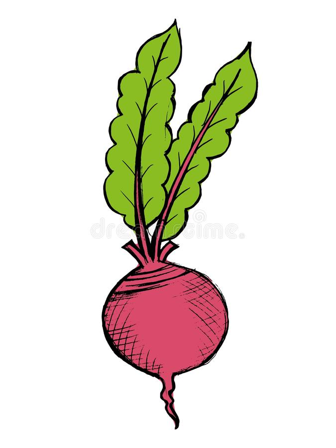Red beet royalty free illustration