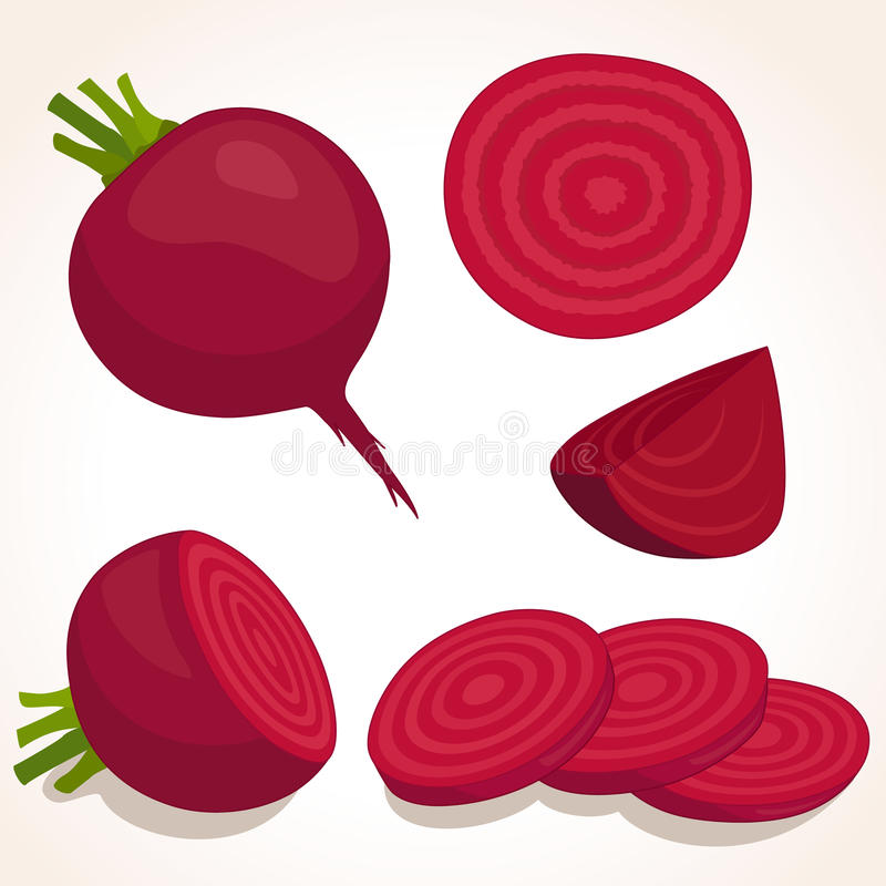 Red beetroot. Vector illustration. Vector beets on background. Red beetroot whole, cut, sliced. Set of fresh beets in different forms vector illustration