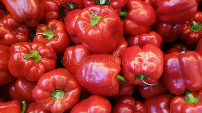 Red bell pepper or capsicum royalty free stock images