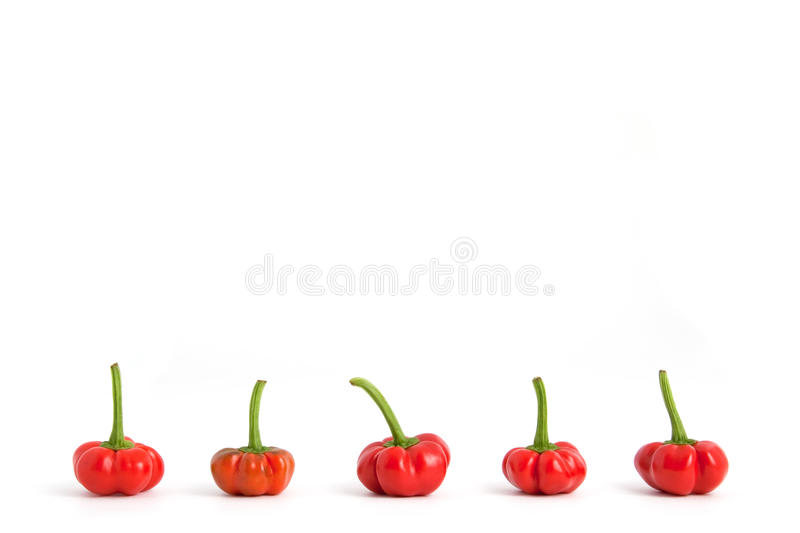 Download Red bell peppers in row stock image. Image of nutrition - 19441175